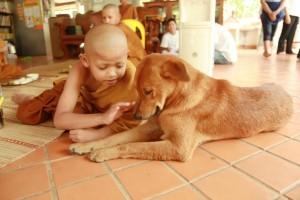 Novice and dog at Wat Pah Boon Lawm