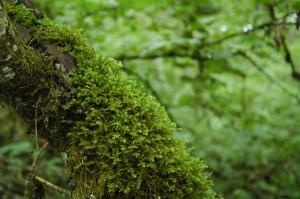 Brilliant Moss