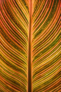 Translucent, colourful leaf